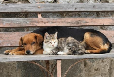disminucion-de-perros-y-gatos-callejeros